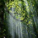 ideas de negocio reciclaje, protege el medio ambiente