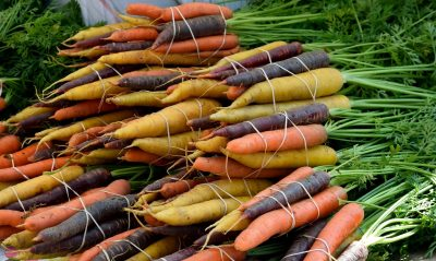 Los mejores negocios rentables agricultura